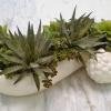 1930's Rum Rill Pottery grape planter filled with permanent succulents for a Summit, NJ dining table in a great room.